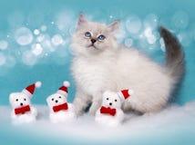 Pequeños gatito y osos siberianos de la decoración de Navidad Foto de archivo libre de regalías