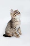 Pequeños gatitos Imagen de archivo libre de regalías