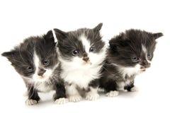 Pequeños gatitos. Fotografía de archivo