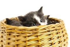 Pequeños gatitos. Imagen de archivo libre de regalías