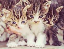 Pequeños gatitos fotos de archivo libres de regalías