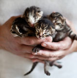 Pequeños gatitos Fotografía de archivo libre de regalías