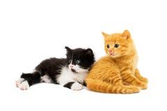 Pequeños gatitos Imágenes de archivo libres de regalías