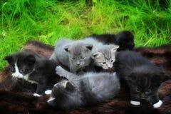 Pequeños gatitos asustados salir a su estera