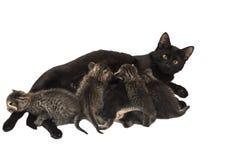 Pequeños gatitos con el gato aislado en blanco Imagenes de archivo