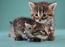 Pequeños gatitos con las pequeñas gotas de los cascabeles del metal Imagenes de archivo