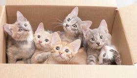 Pequeños gatitos divertidos en una caja Imágenes de archivo libres de regalías