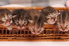 Pequeños gatitos dormidos Foto de archivo libre de regalías