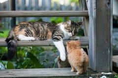 Pequeños gatitos dulces en los pasos Foto de archivo libre de regalías