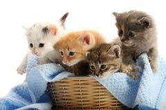 Pequeños gatitos en cesta de la paja Foto de archivo