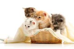 Pequeños gatitos en cesta de la paja Fotos de archivo libres de regalías