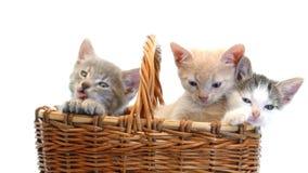 Pequeños gatitos en una cesta