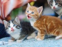 Pequeños gatitos hambrientos jovenes que miran para arriba Imagenes de archivo