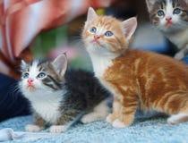 Pequeños gatitos jovenes que miran para arriba Fotos de archivo