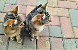 Pequeños gatitos lindos que miran en una dirección foto de archivo libre de regalías
