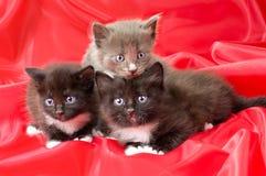 Pequeños gatitos mullidos Imagen de archivo