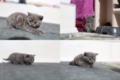Pequeños gatitos que juegan en la alfombra, multicam, pantalla de la rejilla 2x2 Foto de archivo libre de regalías