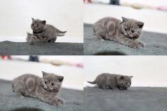 Pequeños gatitos que juegan en la alfombra, multicam, pantalla de la rejilla 2x2 Imágenes de archivo libres de regalías