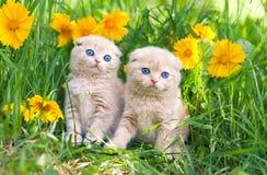 Pequeños gatitos que se sientan en flores Imágenes de archivo libres de regalías