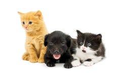 Pequeños gatitos y perrito del perro de aguas Imágenes de archivo libres de regalías
