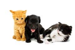 Pequeños gatitos y perrito del perro de aguas Imagenes de archivo