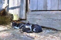 Pequeños gatos Imágenes de archivo libres de regalías