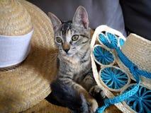 Pequeños gatos grises dulces Imagen de archivo