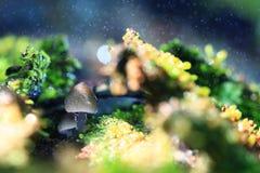 pequeños hongos de molde de la familia fotos de archivo libres de regalías