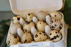 Pequeños huevos de codornices manchados Foto de archivo