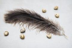 Pequeños huevos de codornices y pluma grande de la avestruz El concepto para Pascua, alimento biológico, adietando, proteína, pon Fotografía de archivo libre de regalías