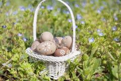 Pequeños huevos de Pascua beige en una cesta blanca Imagen de archivo libre de regalías