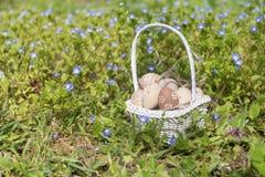 Pequeños huevos de Pascua beige en una cesta blanca Imágenes de archivo libres de regalías