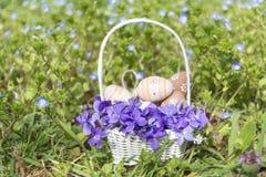 Pequeños huevos de Pascua beige en una cesta blanca con las violetas Foto de archivo