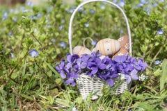 Pequeños huevos de Pascua beige en una cesta blanca con las violetas Imagen de archivo
