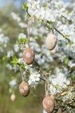 Pequeños huevos de Pascua beige que cuelgan en las ramas de un cerezo floreciente Fotos de archivo