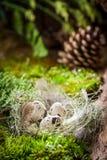 Pequeños huevos para Pascua en bosque en la salida del sol Foto de archivo libre de regalías
