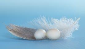 Pequeños huevos y pluma Imágenes de archivo libres de regalías