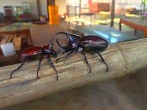 Pequeños insectos Fotografía de archivo libre de regalías