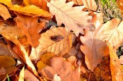 Pequeños insectos rojos en las hojas Fotos de archivo libres de regalías