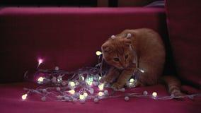 Pequeños juegos del gatito con la guirnalda metrajes
