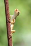 Pequeños lagartos Imágenes de archivo libres de regalías