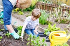 Pequeños muchacho lindo y abuela preescolares del niño que plantan la ensalada verde en primavera Fotos de archivo