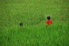 Pequeños muchachos que juegan en el campo Indonesia del arroz Foto de archivo