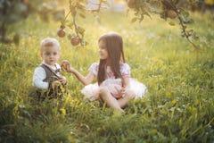 Pequeños niños felices que escogen manzanas Imágenes de archivo libres de regalías