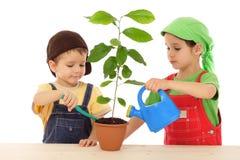 Pequeños niños que cuidan para la planta fotos de archivo libres de regalías