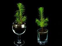 Pequeños ornamentos del árbol de navidad Fotografía de archivo