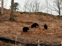 3 pequeños osos imagen de archivo