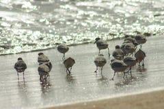 Pequeños pájaros Imágenes de archivo libres de regalías