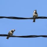 Pequeños pájaros Imagen de archivo