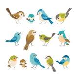 Pequeños pájaros Fotografía de archivo